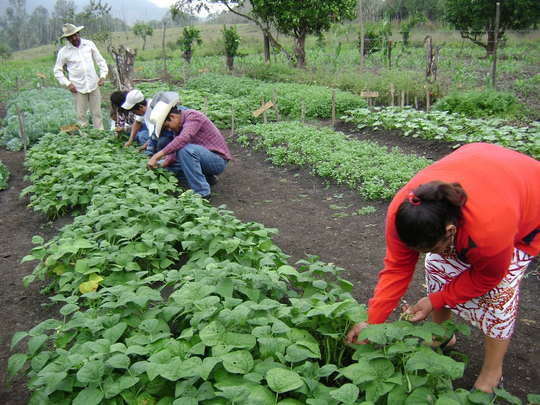 Agricultura Orgánica y Soberanía Alimentaria