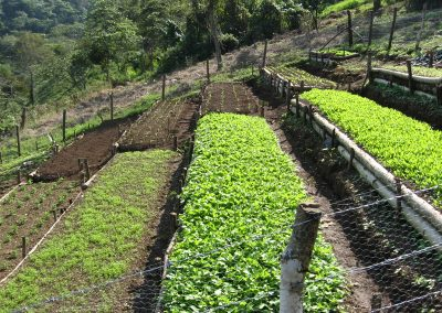 Huerto diversificado de verduras orgánicas