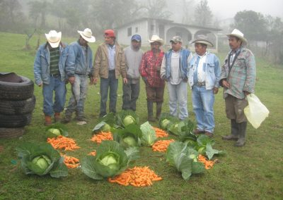Recolección y distribución de zanahorias y repollo