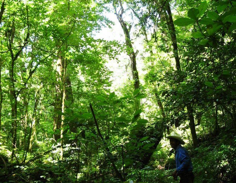 Medio Ambiente y Ecosistemas